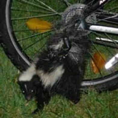 skunk_bike_200x200