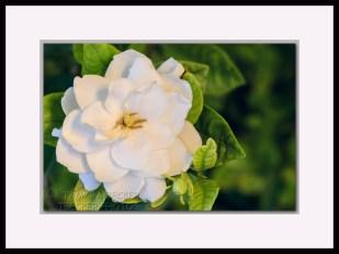 20140503-_DSC1839-framed