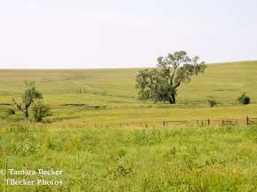 Tallgrass-Prairie-National-Preserve-6522