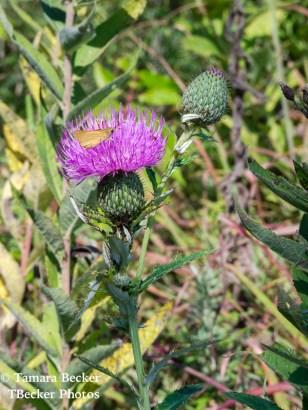 Tallgrass-Prairie-National-Preserve-6533