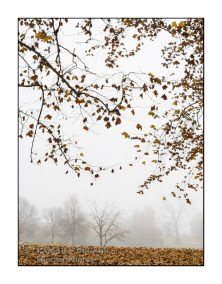 Fog in autumn at East Lake Park in Mt Pleasant, Iowa