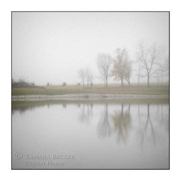 fog-reflection-trees-east-lake-TJB2143