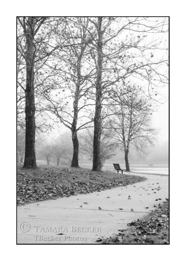 trees-fog-park bench-path-black-white-TJB2207