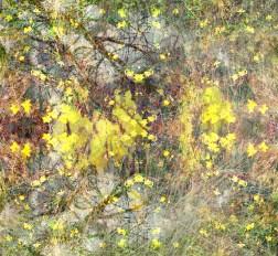 ethereal daffodils