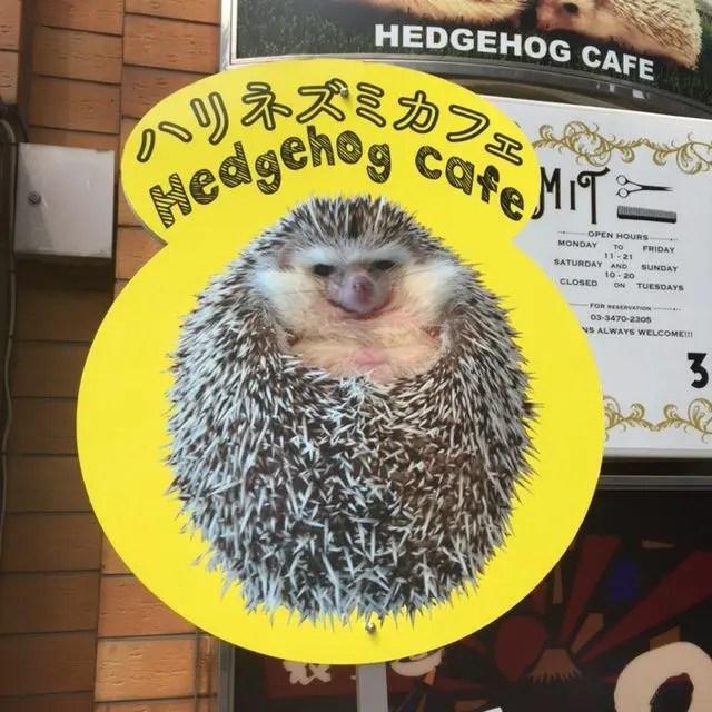 Harry Hedgehog Cafe in Tokyo