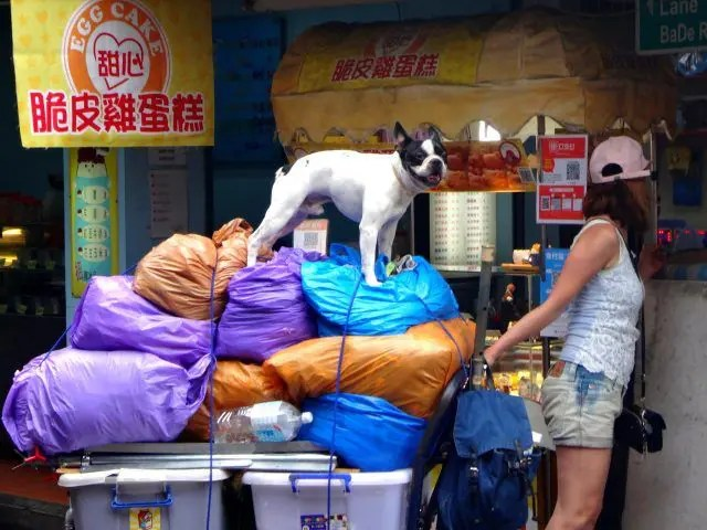 Dog riding a cart at Taipei Night Market