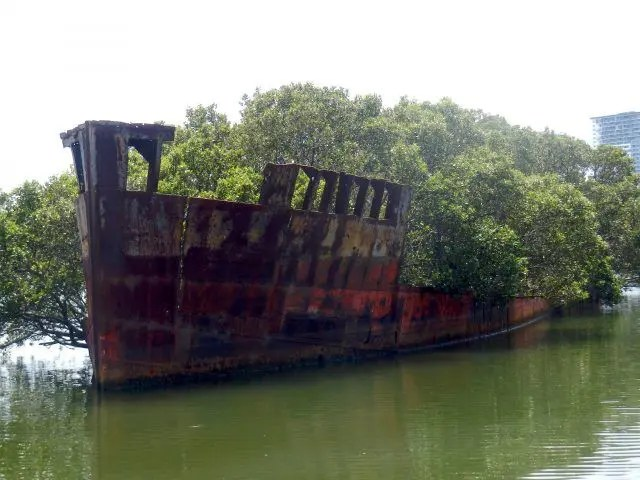 The SS Ayrfield is found just outside Sydney. It was supposed to be broken up for scrap, but instead, it's turned into an amazing floating forest.