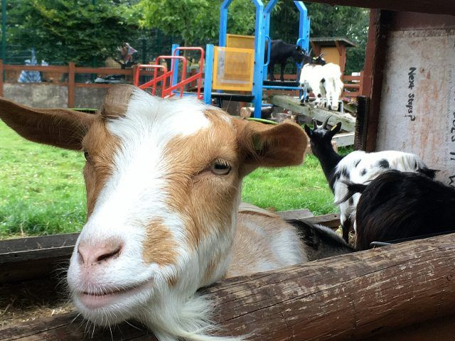 Spitalfields City Farm in London is just steps away from Brick Lane, but makes a great day out. It's top of my list of cute things to do in London.
