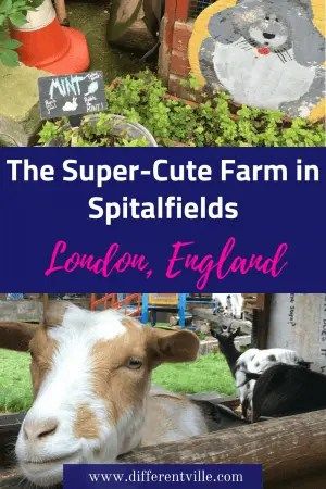 If you're looking for something to do with kids in Central London, don't miss the Spitalfields City Farm near Brick Lane. Here's everything you need to know. #spitalfields #londonfarms #thingstodoinlondon