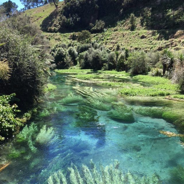 The Blue Spring close to the town of Putaruru in New Zealand's North Island contains crystal clear water that goes bright blue when the sun shines on it. Here's how to get there.