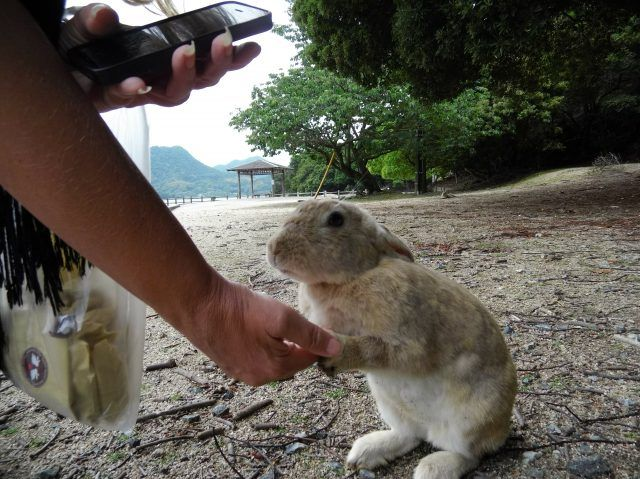 Okunoshima is an island a short day trip from Hiroshima, Osaka or Kyoto. Here's everything you need to know to visit