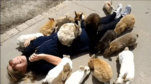 The bunnies on Rabbit Island, Japan are definitely not scared of humans!