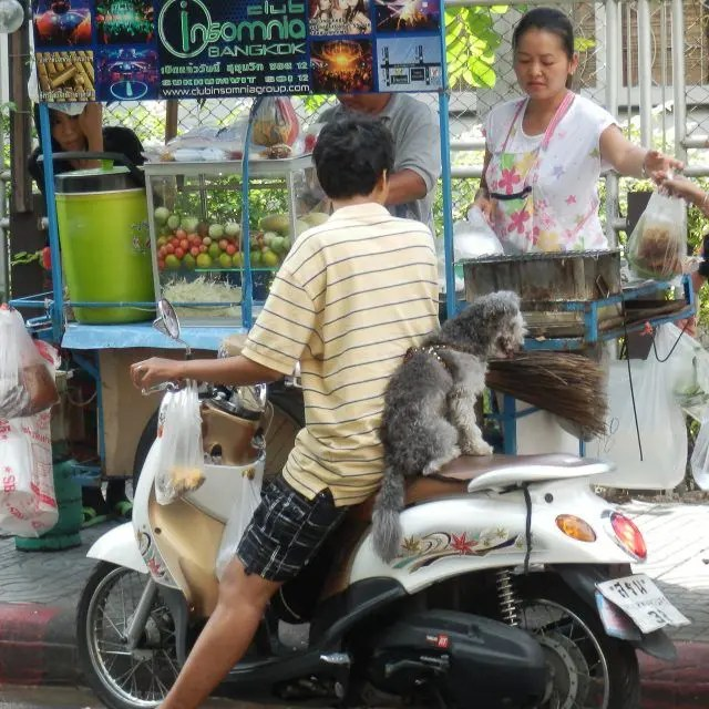 Keep your eyes peeled in Bangkok and you're first trip to Bangkok will be full of amazing sights