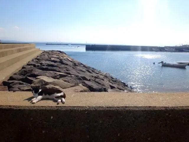 Cat sunning themselves on Ainoshima Island, Fukuoka.