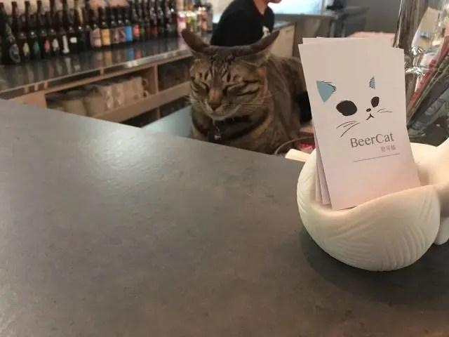 Cat hiding behing the bar at Beer Cat Taipei
