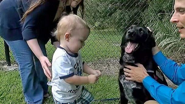 2013-09-13 Good Dog