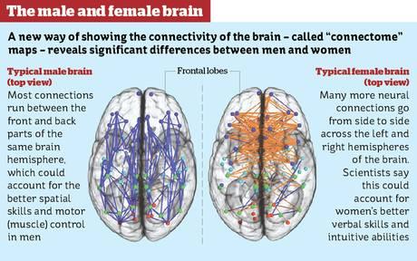 2013-12-03 Male Female Brain