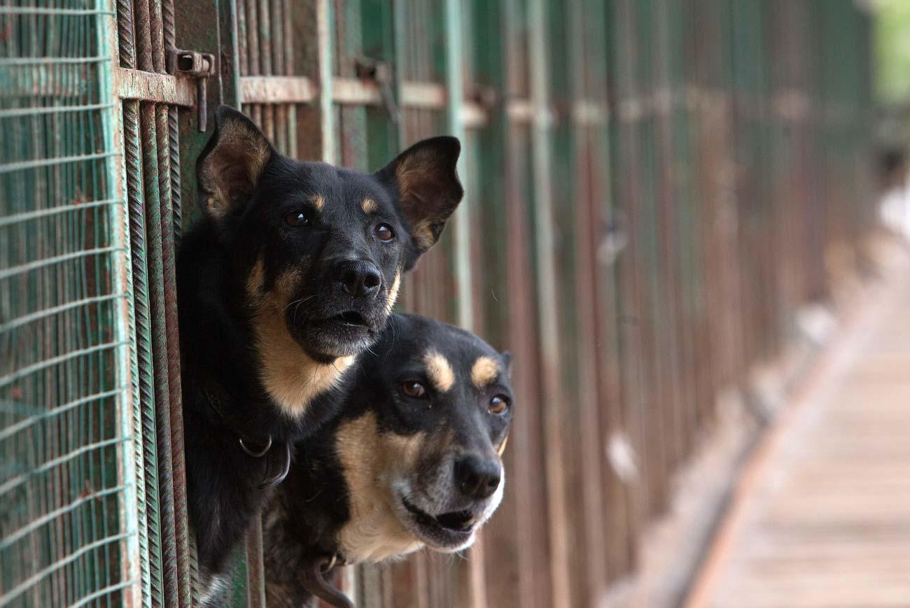 Veterinário aponta cuidados necessários para cães e gatos no outono/inverno