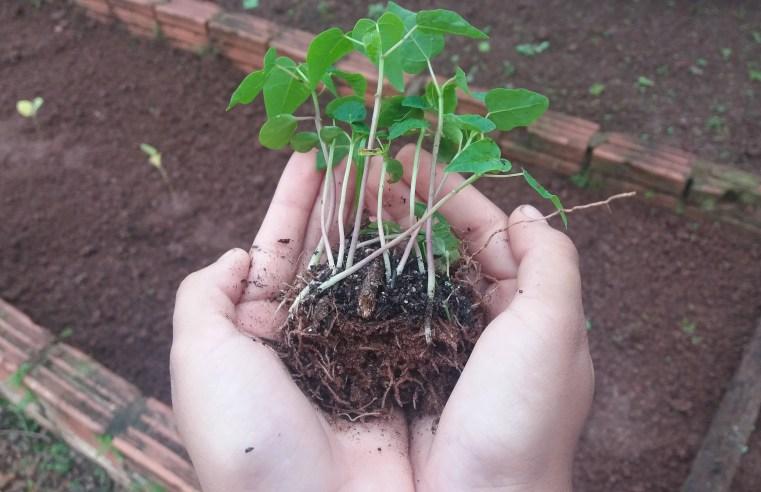 'Broto Verde' fecha parcerias e mantém o projeto 'Jardim do Cerrado'