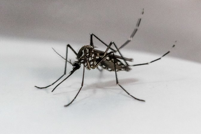Vigilância alerta para surgimento de novos casos de dengue em Assis