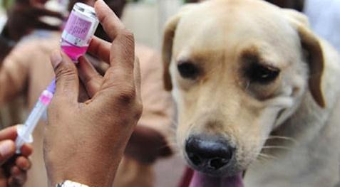 Campanha de vacinação antirrábica 2020 é confirmada para o mês de agosto