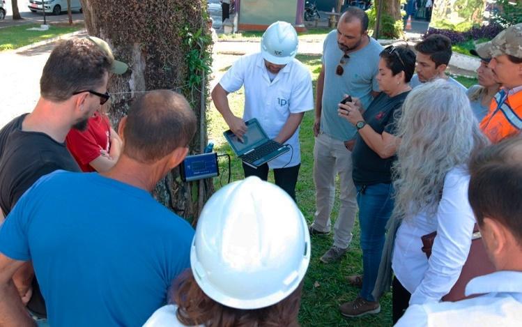 Árvores de áreas públicas passam por análise e laudos definirão possíveis cortes