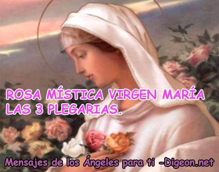 ROSA MÍSTICA VIRGEN MARÍA - LAS 3 PLEGARIAS