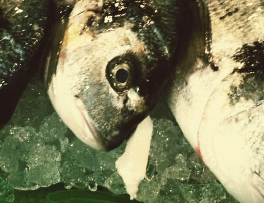 Fish fotografía gastronómica digerible