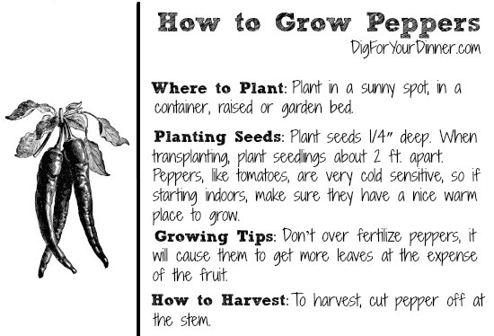 Planting Guide Starting Peppers From Seed Dig For Your