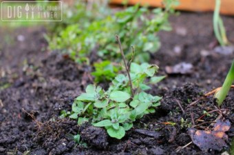 Best Herbs for a Beginner Chef to Grow