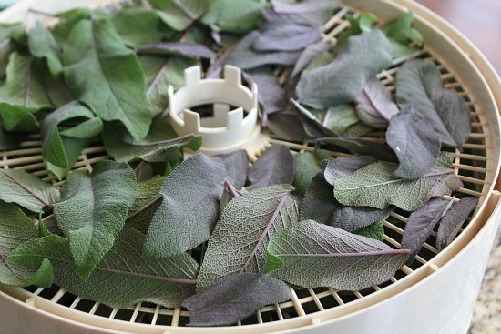 how-to-dehydrate-sage