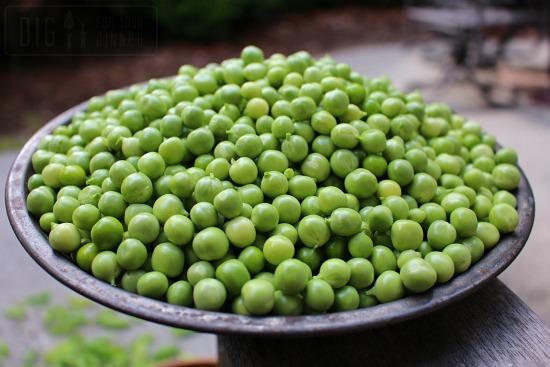 bowl of shelling peas