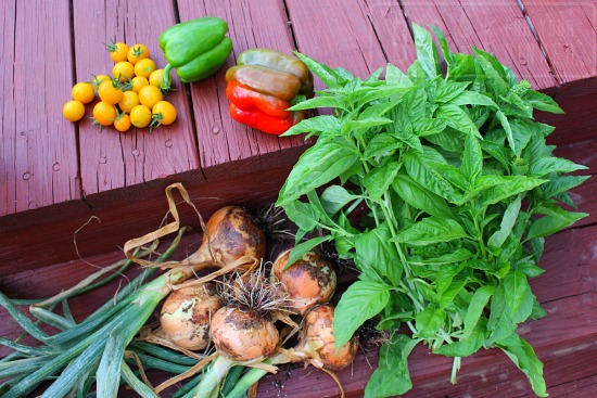 east coast garden harvest