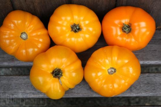 orange-tomatoes