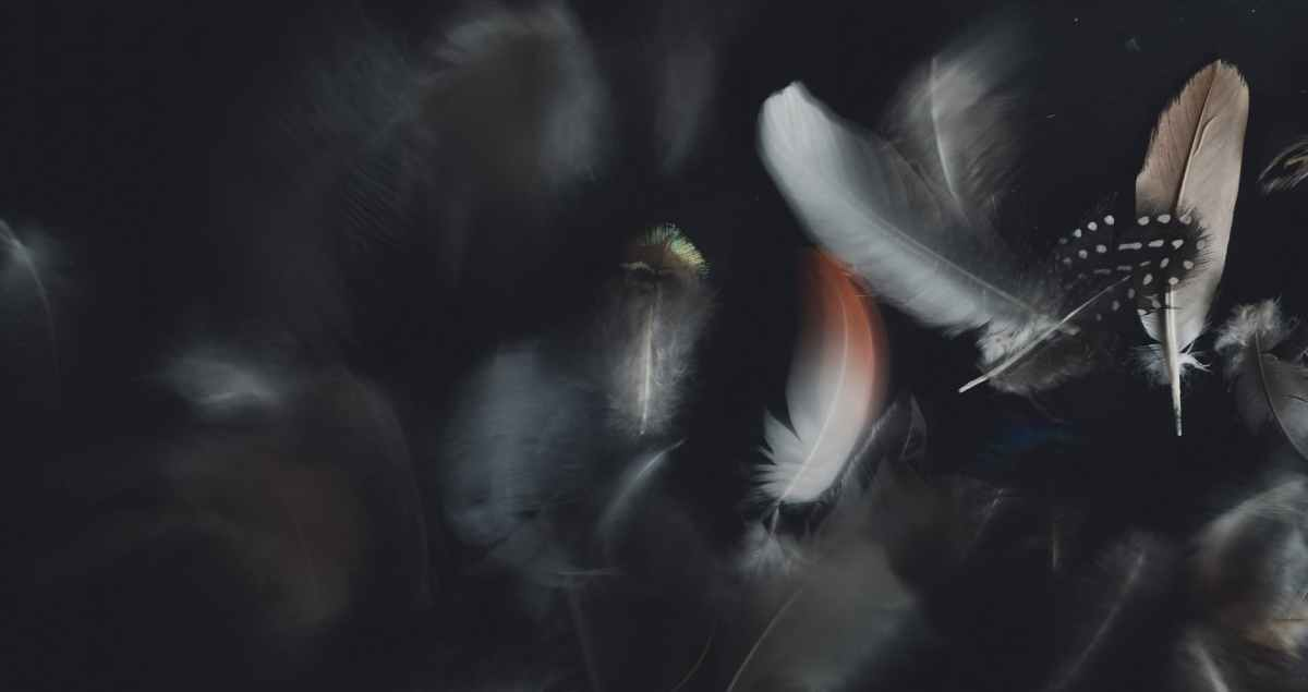 collection of delicate feathers on black background
