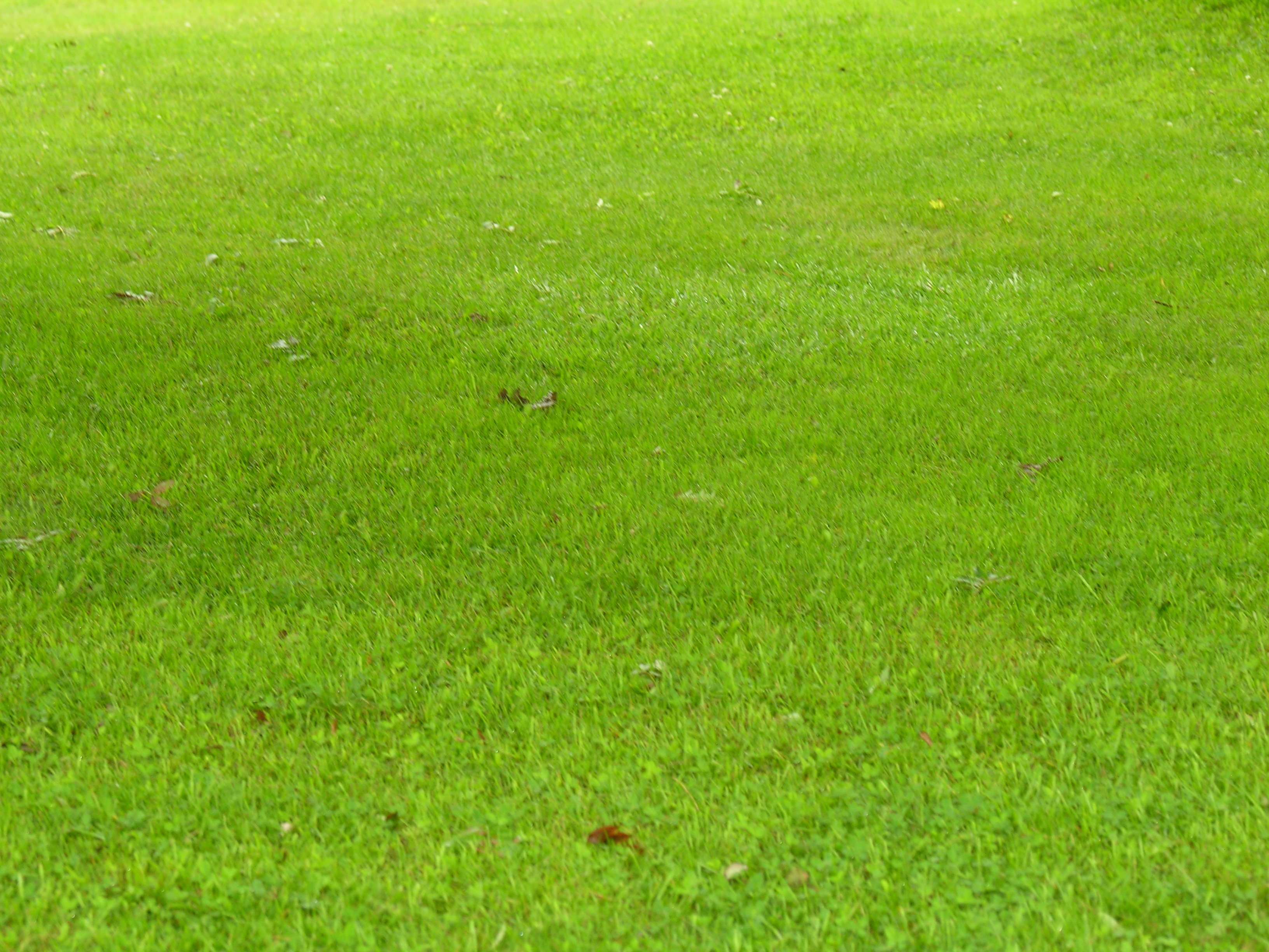 My incredibly green lawn