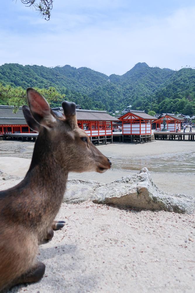 鹿と厳島神社