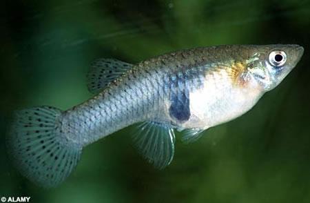 魚は4つまで数を数えることができる