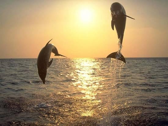 Giochi di Delfini