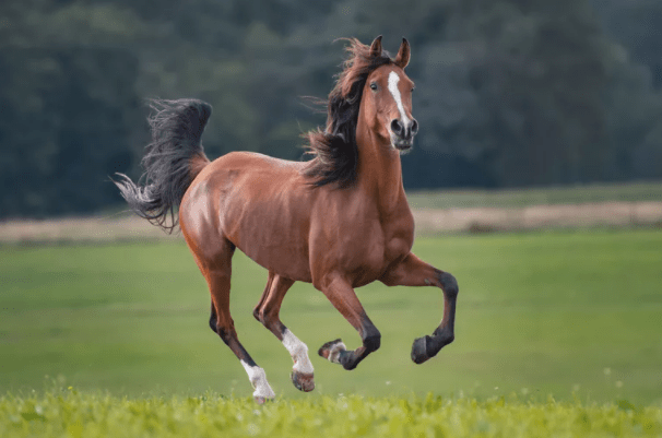 Horses Crave To Death As Pandemic Hits