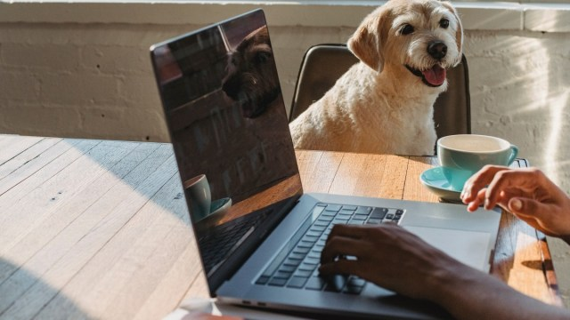 Pets name in passwords