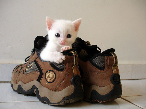 A kitten preparing for a hike.