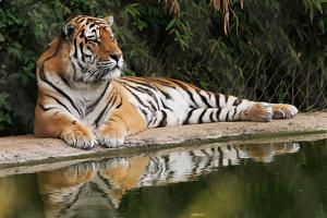 Zoo-Photography-3