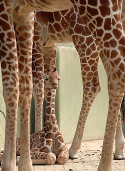Zoo Photography Tips