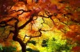 Autumn (Fall) Photography – Capturing Colours