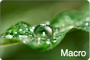 Manual-Focus-Macro