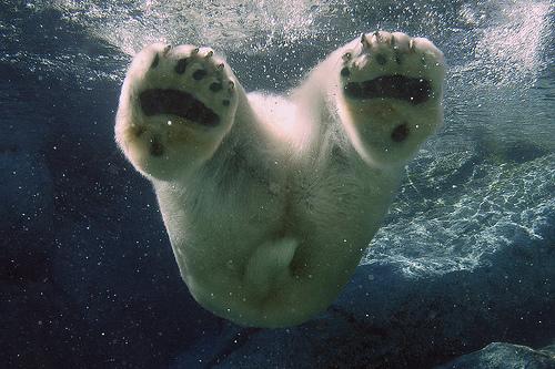 Under-Water-14