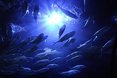 15 Inspiring Underwater Images