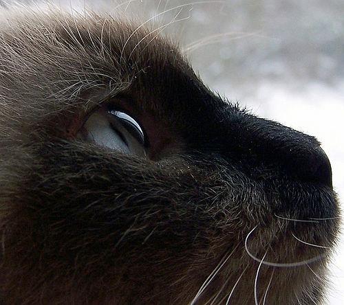 dicas para fotos de animais de estimação em close-ups de gatos