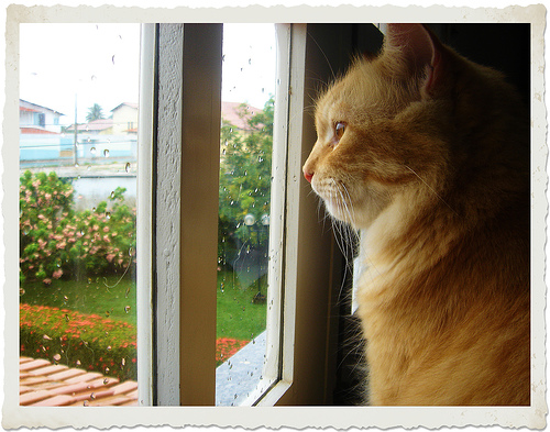 gato olhando pela janela